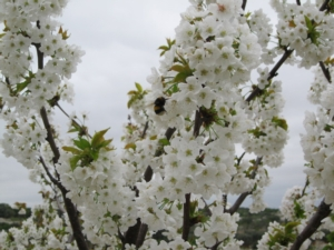 fioritura-fonte-green-has-italia