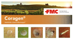 Coragen<sup>®</sup>: uno scudo per l'uva da tavola