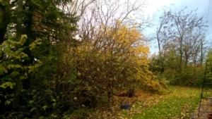 foglie-1-fonte-alfonso-paltrinieri-rubrica-pubblici-giardini-20201028