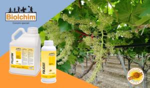 Allungamento grappolo: produzione e qualità - Fertilgest News