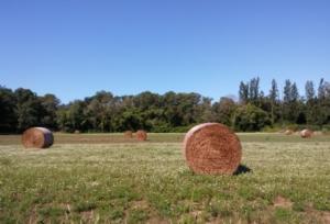 foraggi-rotoballe-campo-fieno-by-matteo-giusti-agronotizie