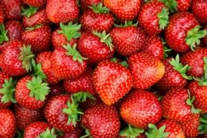 L'EVENTO E' STATO POSTICIPATO AL 2021- International strawberry Symposium 2020: ecco il programma della 9° edizione - Plantgest news sulle varietà di piante