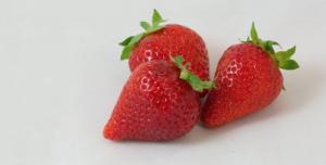Belle storie, dal vivaio al produttore, targate Salvi Vivai - Plantgest news sulle varietà di piante