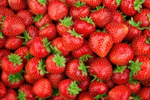 fragole-fragola-by-tim-ur-adobe-stock-749x500