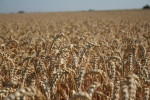Linea diserbi cereali FMC