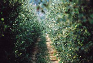 frutta-filari-conerpo1