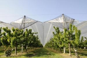 Reti multifunzionali, nuova frontiera della frutticoltura - Plantgest news sulle varietà di piante