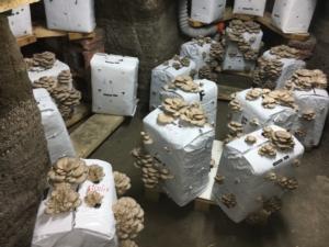 funghi-grotta-rubrica-agroinnovatori-feb-2021-fonte-azienda-agricola-moretti