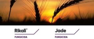 Rikali<sup>®</sup> e Jade<sup>®</sup>: contro le patologie dei cereali