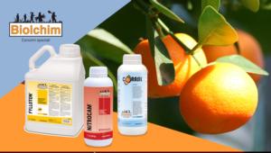 fylloton-nitrocam-corasil-ingrossamento-frutti-2020-giugno-fonte-biolchim