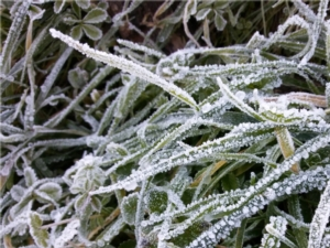 gelate-erba-brina-750-by-matteogiusti-agronotizie