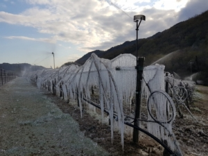 gelate-fonte-alleanza-cooperative-agroalimentari-202105111
