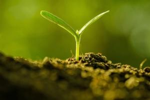 germoglio-piante-pianta-singkham-fotolia-750