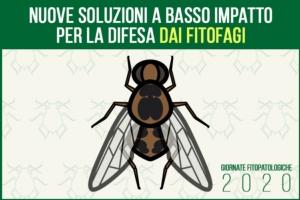 gf2020-difesa-fitofagi-basso-impatto-fonte-agronotizie.jpg