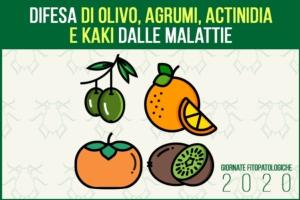 La difesa di olivo, agrumi, actinidia e kaki dalle malattie