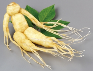 ginseng-by-cdkproductions-adobe-stock-750