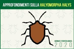 giornate-fitopatologiche-2020-cimice-asiatica-fonte-agronotizie1