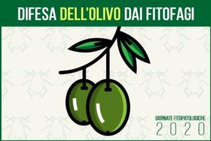 giornate-fitopatologiche-2020-olivo-fonte-agronotizie