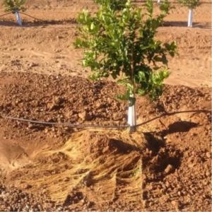 Seiland, rivitalizza la rizosfera e migliora il rapporto suolo/pianta - le news di Fertilgest sui fertilizzanti