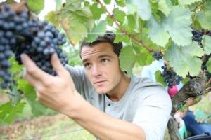 giovani-giovane-agricoltore-agricoltori-vite-vendemmia-uva-vigneto-by-goodluz-fotolia-750x500