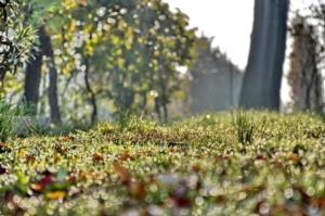 gocce-pioggia-rugiada-prato-erba-foglie-autunno-vite