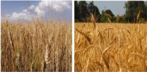 Sprint Veg, farina del mio sacco - le news di Fertilgest sui fertilizzanti
