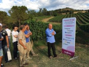 Grape Field Tour, le soluzioni di Syngenta contro peronospora e oidio in viticoltura