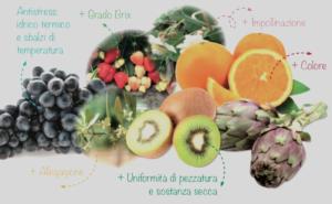Due prodotti contro gli stress da caldo - le news di Fertilgest sui fertilizzanti