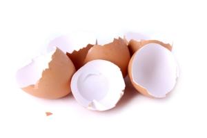 Il guscio dell'uovo può essere utilizzato come fonte di fosfato per le piante? - colture - Fertilgest