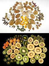 hortresearch-kiwi-biodiversita
