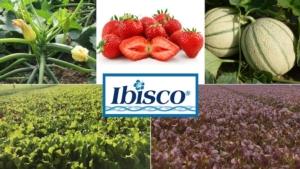 ibisco-marzo-2021-fonte-gowan