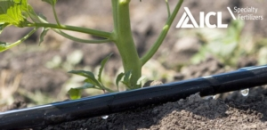 icl-irrigazione-nutrizione-goccia-fonte-icl