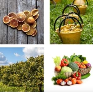 igp-dop-fonte-consorzio-limone-siracusa-igp-20170503