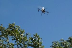 impollinazione-olivo-drone-aermatica3d
