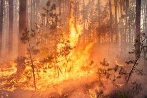 incendio-fuoco-fiamme-by-gilitukha-fotolia-750