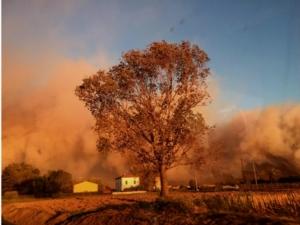 incendio-monti-pisani-albero-by-paola-casazza-jpg
