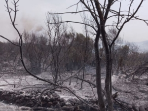 incendio-sennariolo-26-lug-2021-coldiretti-sardegna