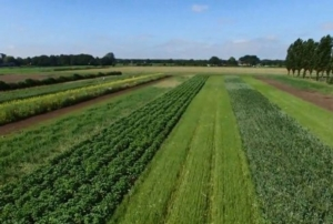 intercropping-wageningen-2