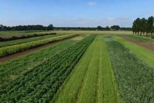 Intercropping, che cos'è e perché fa bene (al biologico) - Plantgest news sulle varietà di piante