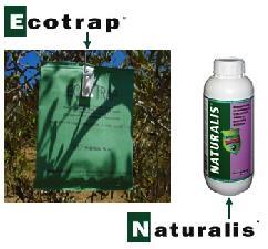intrachem-mosca-olivo-ecotrap-naturalis