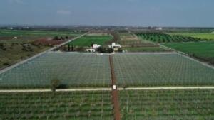 iride-multi-pro-apricot-fonte-arrigoni