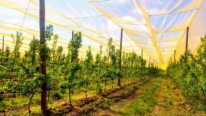 Frutticoltura di precisione: soluzioni tecniche - Plantgest news sulle varietà di piante