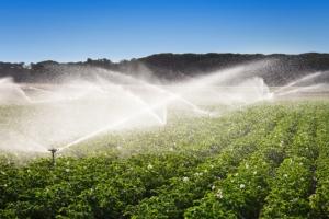 irrigazione-acqua-campo-patate-fonte-demachi-istock-750