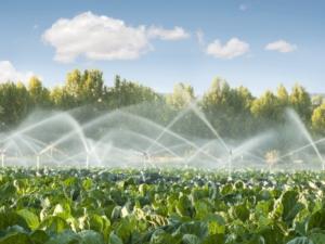In che modo posso registrare le irrigazioni con QdC?