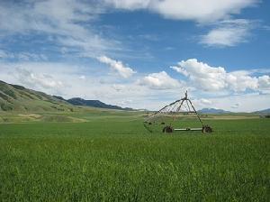 irrigazione-campo-flickr-cc20-byopencontent