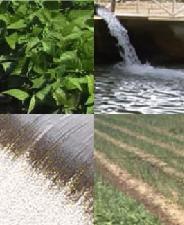 irrigazione-colture-orticole-convegno-internazioanale-2009