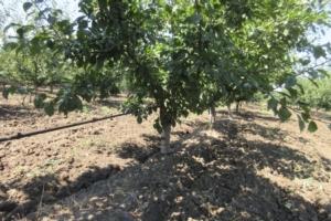 irritec-irrigazione-frutteto