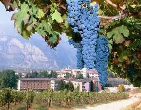 istituto-agrario-iasma-grappolo-uva-vite-vino-byfemiasma