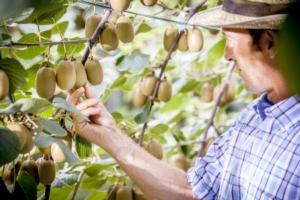 Jingold: risultati positivi per la campagna 2014-15 - Plantgest news sulle varietà di piante