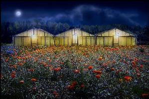 jour-et-nuit-by-vanden-eyde-concorso-fotografico-obiettivo-agricoltura-20091